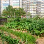 """""""Blattgarten"""" in der Ziolkowskistraße - im Juli 2014 blüht es schon üppig"""